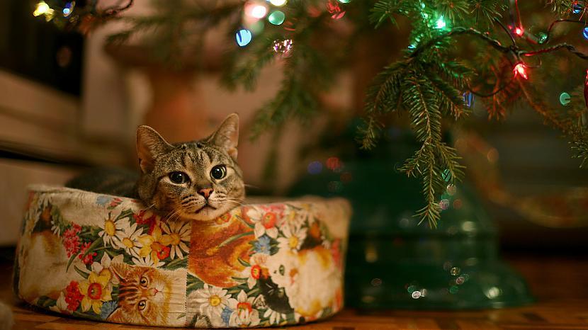 56 procenti aptaujāto atzīmē... Autors: amonty Un ko Tu vēlies Ziemassvētkos?