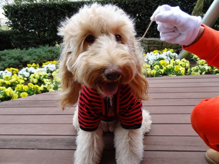Suns ar visgarākajām... Autors: Tavs kolēģis Dīvaini pasaules rekordi! Skaļākais krāniņš pasaulē!
