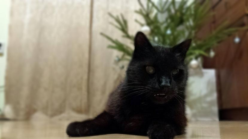 Autors: otootooto Kaķītis!!!