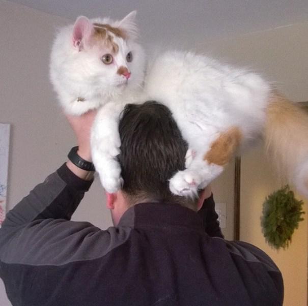 Autors: Fosilija Jauns stulbings - kaķis kā cepure.