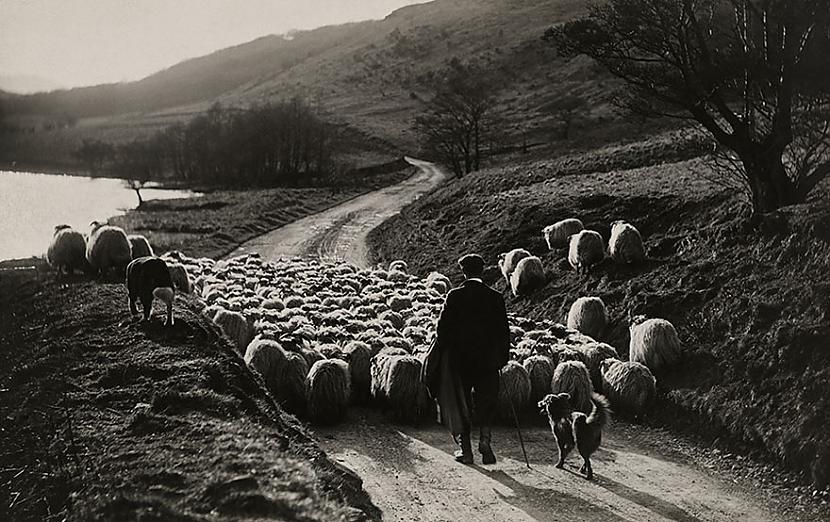 Aitu gans Skotijā 1919 Autors: me guusta 16 agrāk nepublicēti foto no National Geographic arhīviem,kas aizraus elpu!