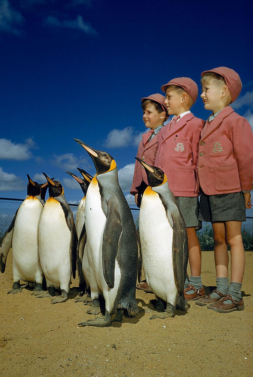 Zēni skolas uniformās pozē... Autors: me guusta 16 agrāk nepublicēti foto no National Geographic arhīviem,kas aizraus elpu!