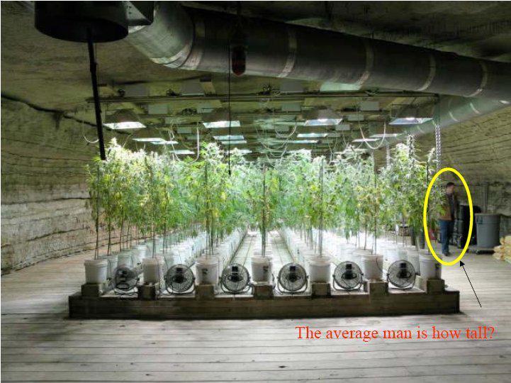 Varat salīdzināt cik milzīgi... Autors: Fosilija Marihuānas audzētava lauku mājā ŠOKS! Policija atklāj ko neiedomājamu!