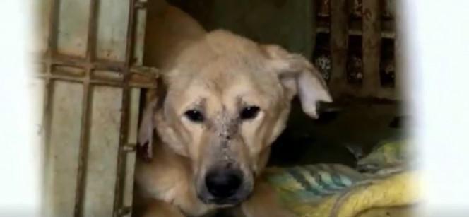 Tur bija iespiesti aptuveni... Autors: Razam4iks Viņa gribēja izglābt tikai dažus suņus, bet tad viņas plāni krasi mainījās.