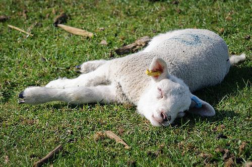 9SLEEPING SHEEPYSleeping... Autors: ShadowApollo TOP 10 Latvijā veidotās Windows 8 programmas