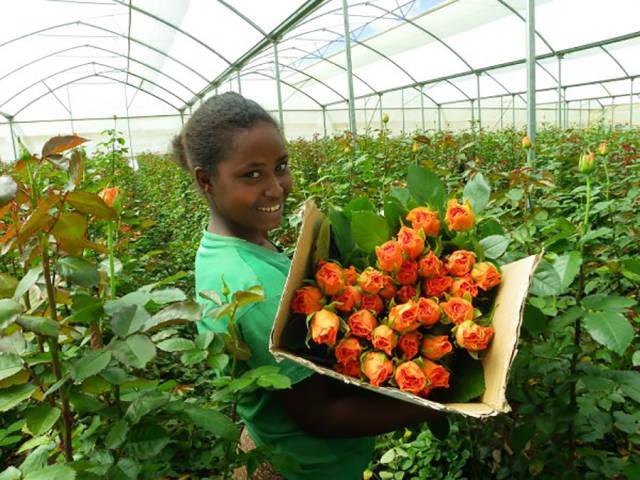 Kenija ir otra lielākā ziedu... Autors: im mad cuz u bad Interesanti fakti par Āfriku