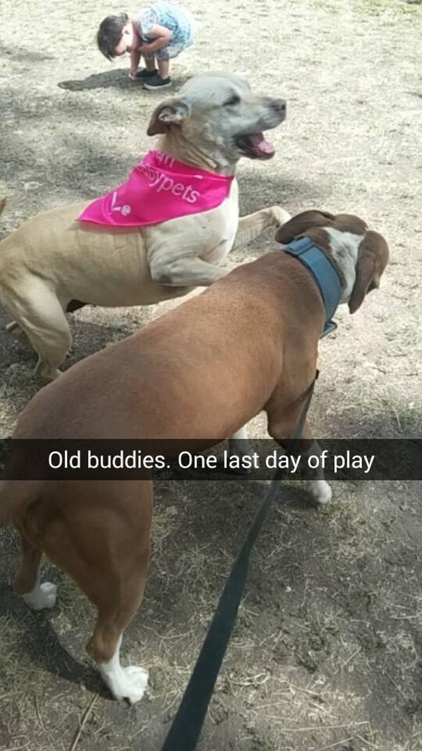 Vecie draugi Pēdējā rotaļu... Autors: matilde Šī sieviete iemūžināja sava mirstošā suņa pēdējo dienu