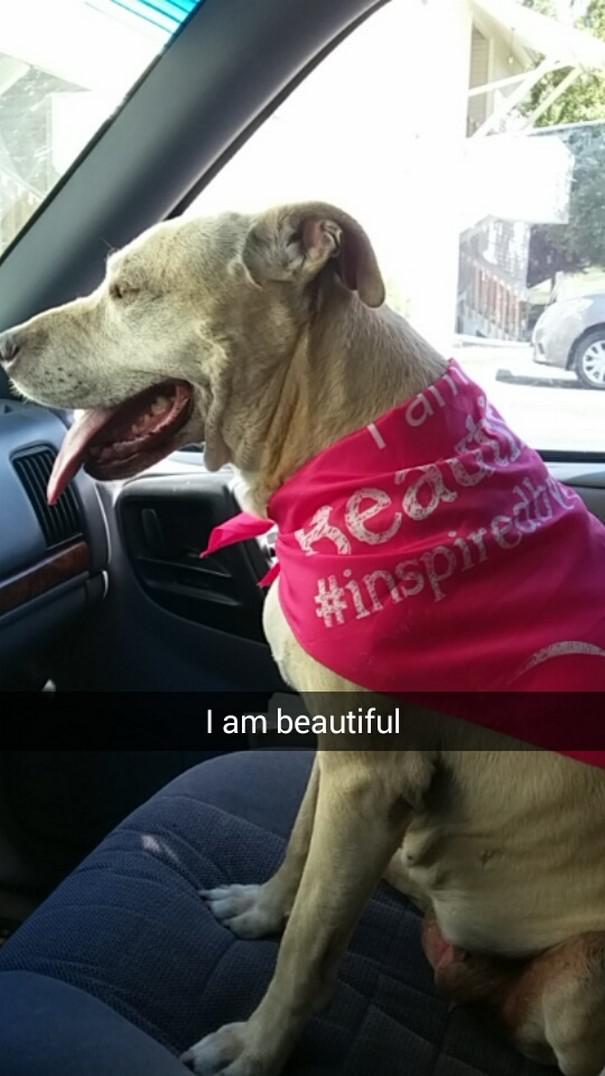 Es esmu skaista Autors: matilde Šī sieviete iemūžināja sava mirstošā suņa pēdējo dienu