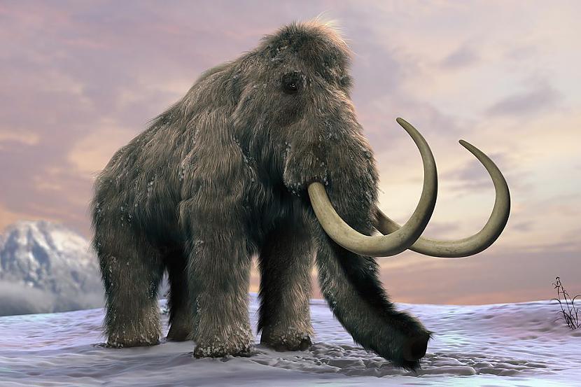 Vai arī kad pēdējais mamuts... Autors: RestInPeaces 21 fakts, kas mainīs tavu skatījumu uz dzīvi.