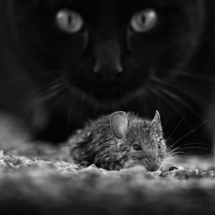 Autors: KALENS Noslēpumainās kaķu dzīves notvertas melnbaltā