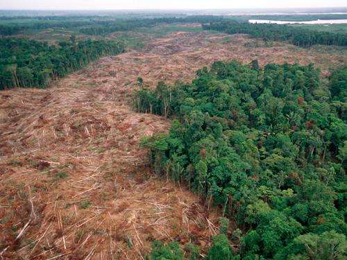 3 Problēma ir mežu... Autors: Fosilija Nākotne
