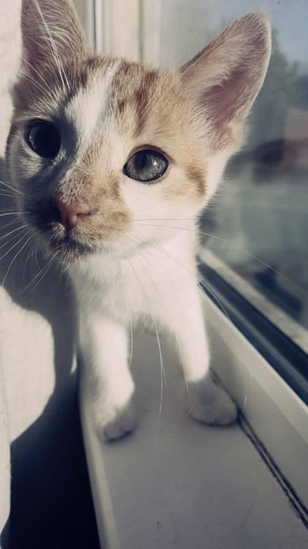 I am little Tommy Autors: kristen Two happy UK cats