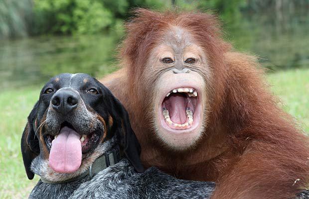 Autors: Heilla Dzīvnieku draudzība