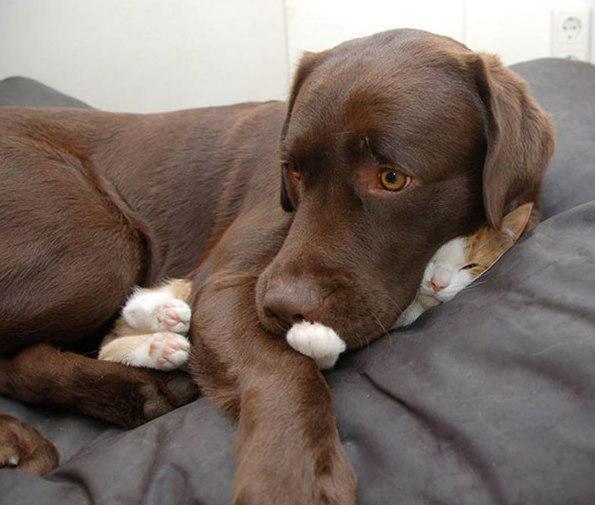 Kaķis Kur Autors: Ciema Sensejs 20+ kadri, kuri pierāda, ka kaķi var gulēt pilnīgi visur