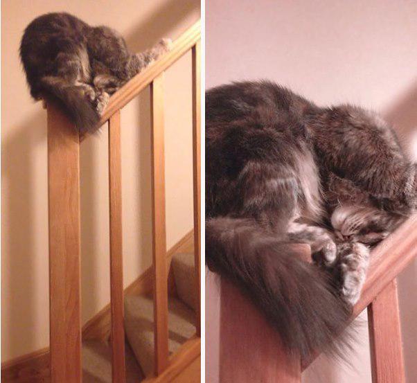 Nav saprotams gribēja kāpt uz... Autors: Ciema Sensejs 20+ kadri, kuri pierāda, ka kaķi var gulēt pilnīgi visur