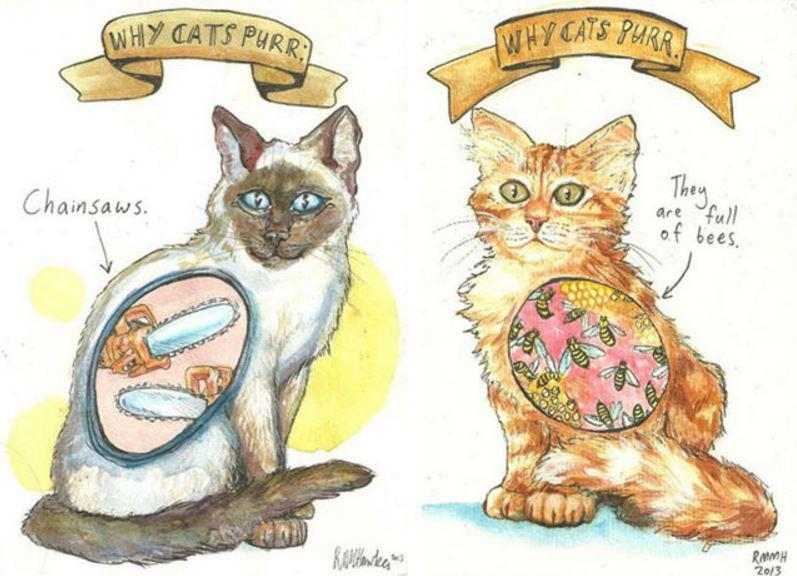 Neskatoties uz to ka... Autors: Lestets Kāpēc kaķi murrā?