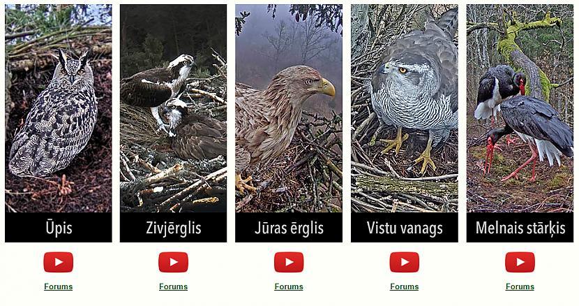 Autors: matilde Ja Tev nav ko darīt, tad vari pavērot putniņus tiešsaistē
