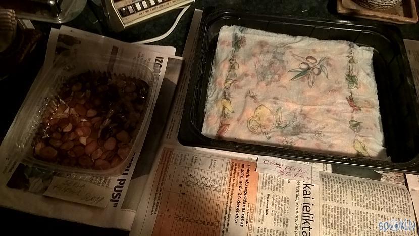 Biju uzlicis diezēties cūku... Autors: Werkis2 Sējam, audzējam un stādām 2017 - 003 - Tomāti, Paprika un Cūku pupas