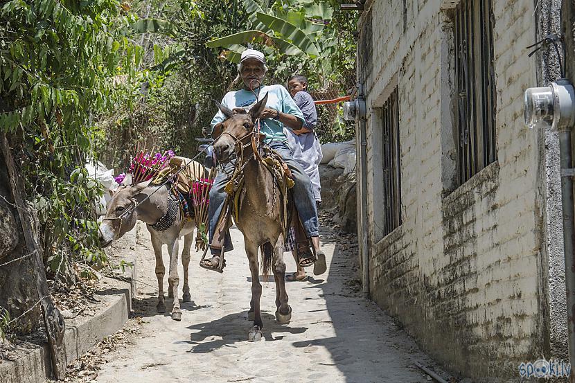 Scaronis tieca kad viņu varot... Autors: Alex Vikingo Foto no Meksikas ikdienas
