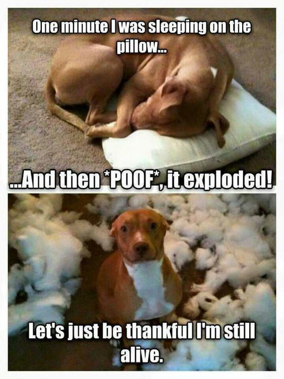 Autors: ProudBe Funny dogs and quotes!