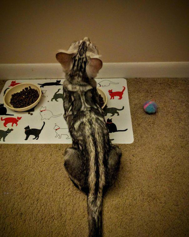 Autors: Fosilija Kaķīši ar smieklīgām spalvām