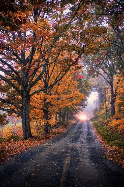 Autors: Fosilija Autumn #12