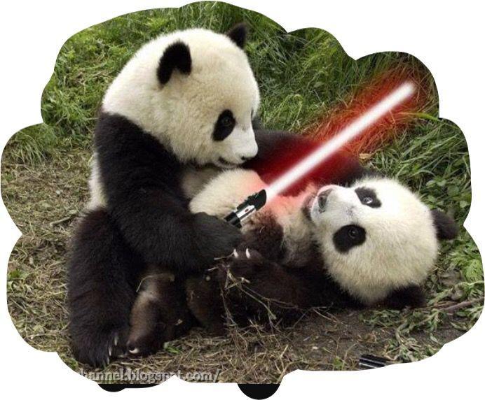 Star wars padas reeka Autors: ere222 zxzxhzc Pandas