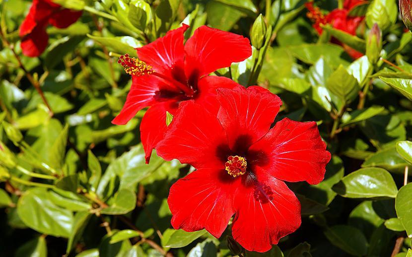 Autors: mazais28 Ziedi 19