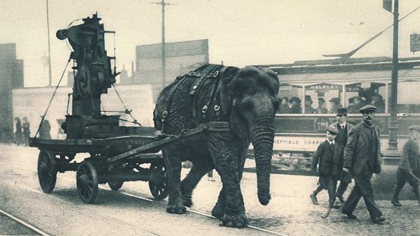 Lizija Scaronefīldas ielās... Autors: Lestets Ziloņi 1. pasaules kara laikā
