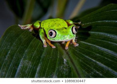 ChitrīdsNāvējoša sēnīte kuru... Autors: Everbergerdīne 9 slimības, kas nopietni skar dzīvnieku sugas.