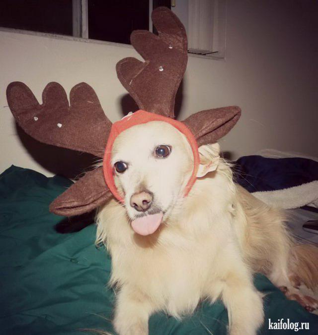 Autors: Pīters Kvils Smieklīgas Ziemassvētku un Jaunā Gada bildītes #2