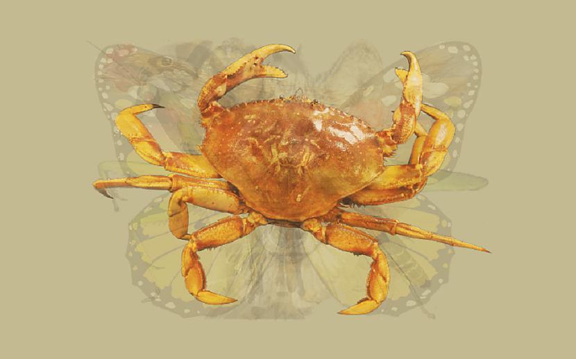 KRABISTev kopīgais ar krabi ir... Autors: Lestets Pirmais dzīvnieks, ko ieraudzīsi, atbildīs tavām dominējošajām rakstura īpašībām