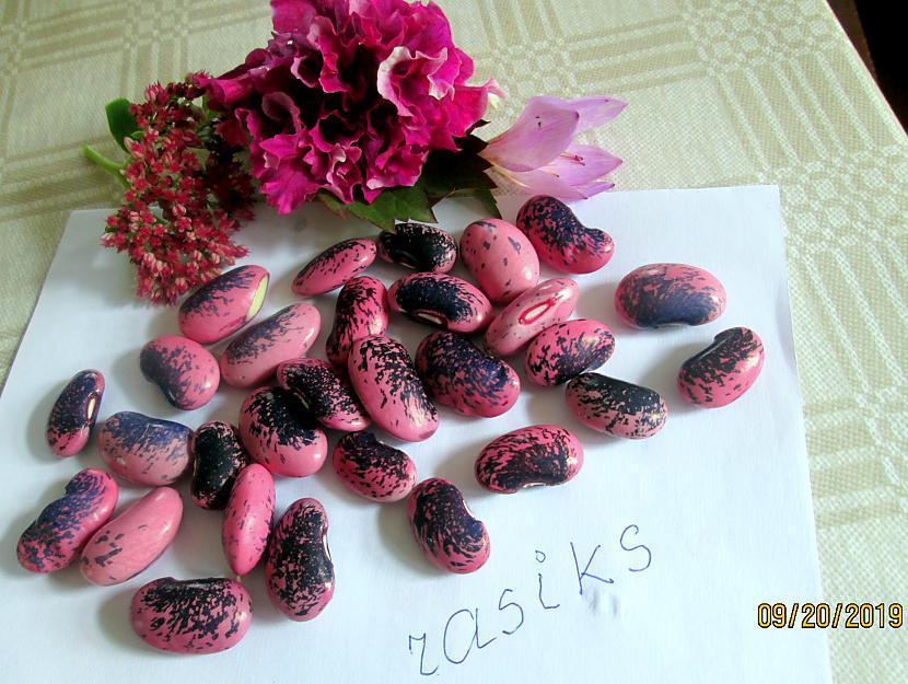 Autors: rasiks FS kaut kas violets