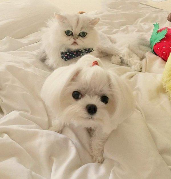 Autors: Fosilija 47 attēli ar jaukiem suņukiem un kaķīšiem, kuri varētu tev patikt