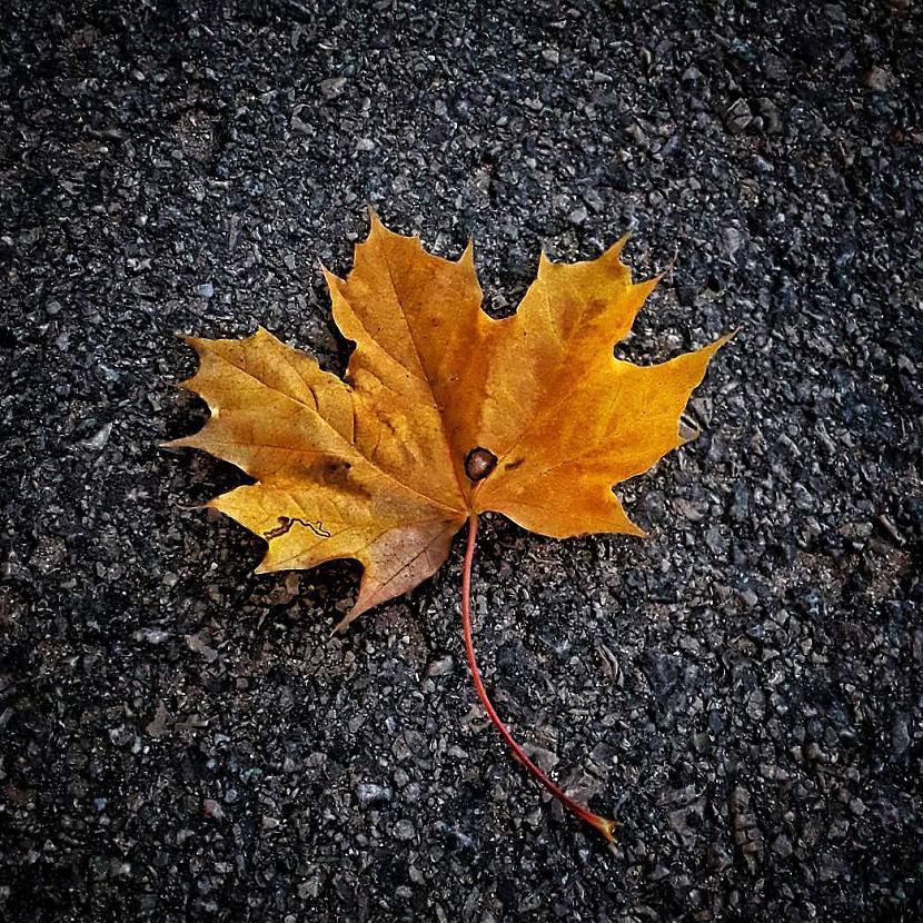 Pievienoja Krauklīc Autors: The Diāna Atvērtais raksts: Labākie rudens foto