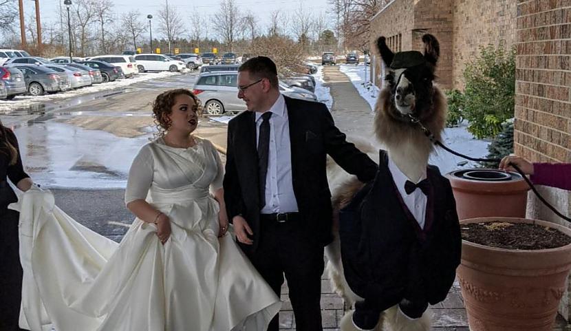Jaunā sieva izteikusies ka nav... Autors: matilde Par interneta sensāciju kļuvis vīrietis, kurš uz māsas kāzām atvedis lamu
