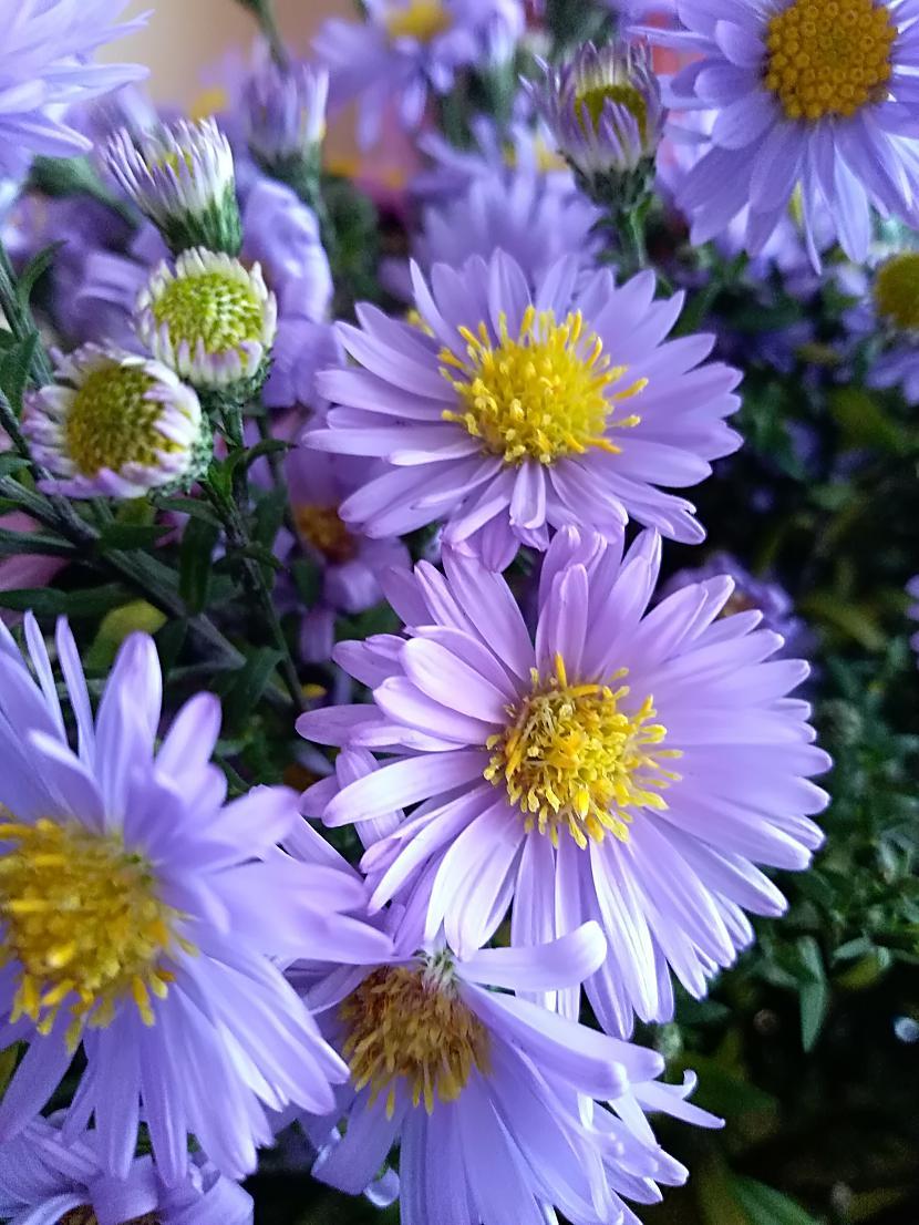Vienkāršs skaistums Pievienoja... Autors: The Diāna Atvērtais raksts - Parādi rudens skaistumu!