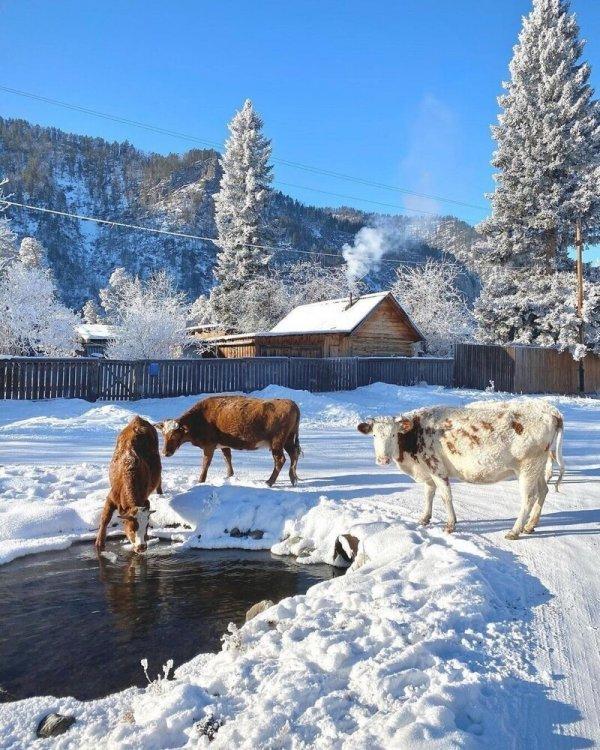 Autors: Zibenzellis69 Bildes no Krievijas ciematiņiem, kas varētu uzdzīt nostalģiskas atmiņas