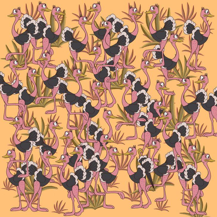 Atbilde zemāk darr Autors: matilde Tests: Vari atrast dzīvniekus un priekšmetus, kas paslēpušies šajos 15 attēlos?