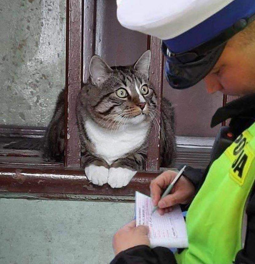 Pārkāpa pulcēšanās noteikumus Autors: Zibenzellis69 Bildes jautrākai dienai #7