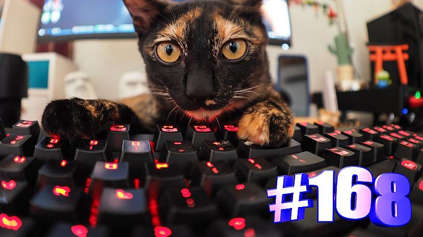 Autors: kotomaniabest Smieklīgi kaķi   Jautrība ar kaķiem, katomanija #168 (video)