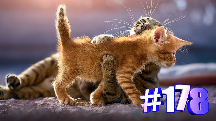 Autors: kotomaniabest Smieklīgi kaķi | Jautrība ar kaķiem, katomanija #178 (video)