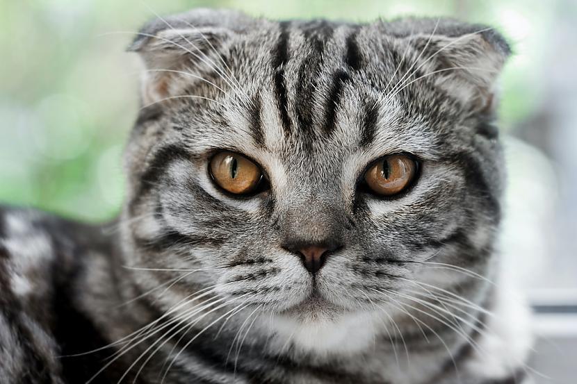 10 Elastīgs mugurkauls palīdz... Autors: matilde Desmit ļoti interesanti fakti par kaķiem