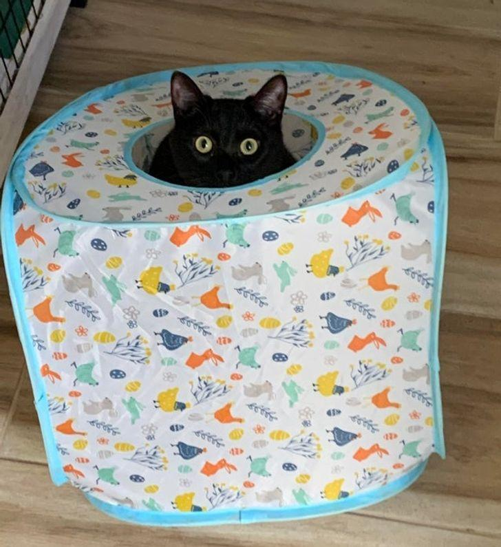 8 Ja tu dzīvo kopā ar kaķi tad... Autors: The Diāna 20 tvīti, kuri perfekti raksturo dzīvi kopā ar kaķi