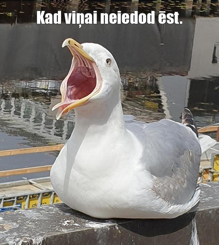 Autors: stoormtrooper6 Memes