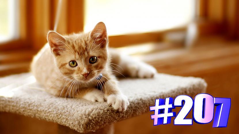 Autors: kotomaniabest Smieklīgi kaķi   Jautrība ar kaķiem, katomanija #207 (video)