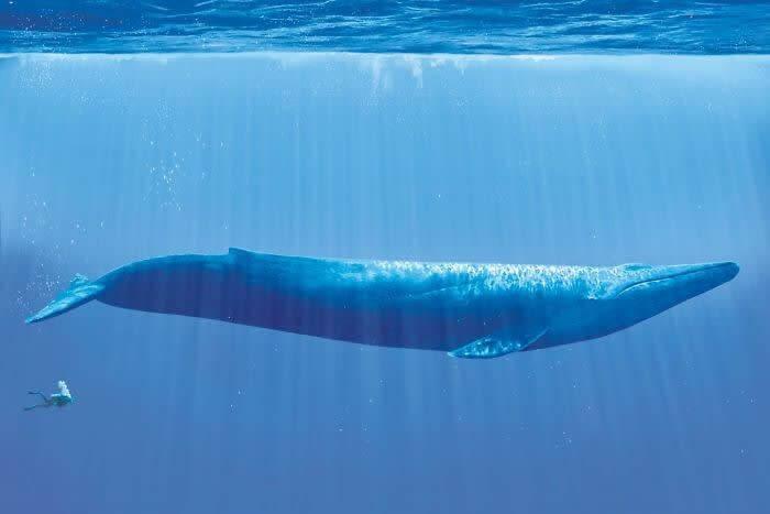 Zilais valis salīdzinājumā ar... Autors: Lestets 25 salīdzinājumi, kas atklāj lietu patieso būtību