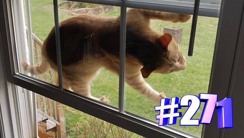 Autors: kotomaniabest Smieklīgi kaķi | Jautrība ar kaķiem, katomanija #271 (video)