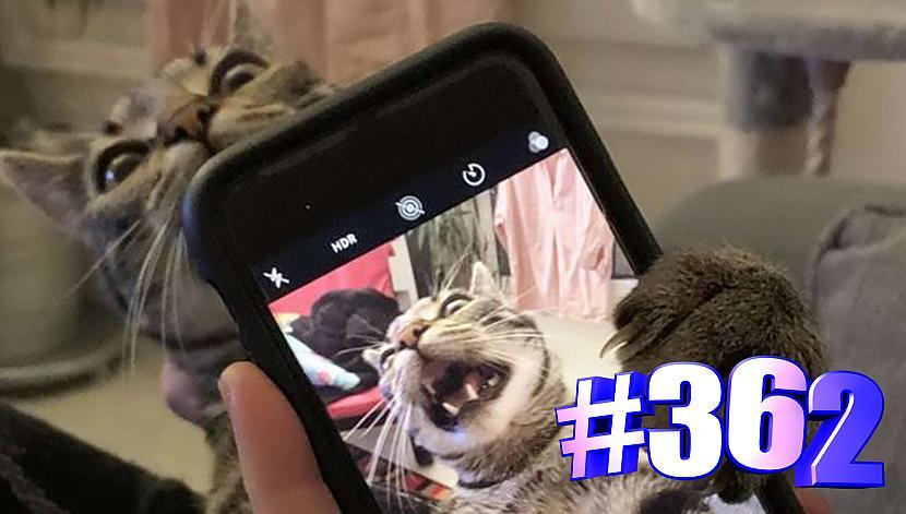 Autors: kotomaniabest Smieklīgi kaķi | Jautrība ar kaķiem, katomanija #362(video)