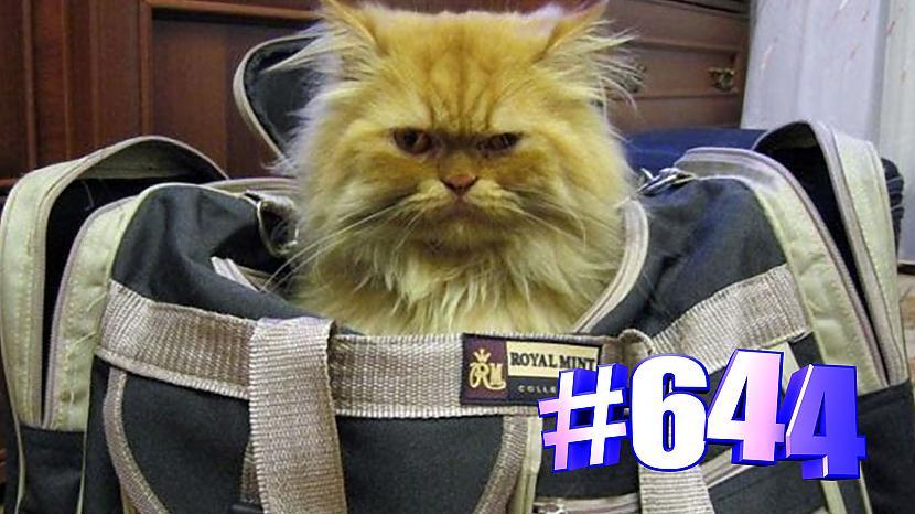 Autors: kotomaniabest Kaķi un somas 😍😘🐱